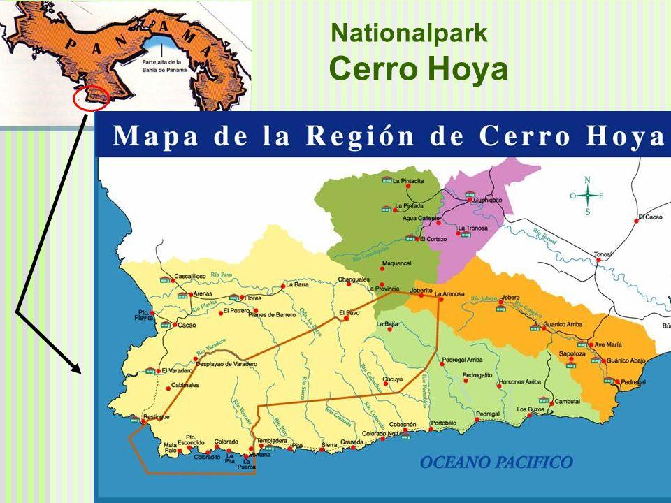 1984: Ausweisung des Nationalparkes Cerro Hoya Ziel: Schutz des letzten zusammenhängenden Primärwaldbestandes auf der Halbinsel von Azuero