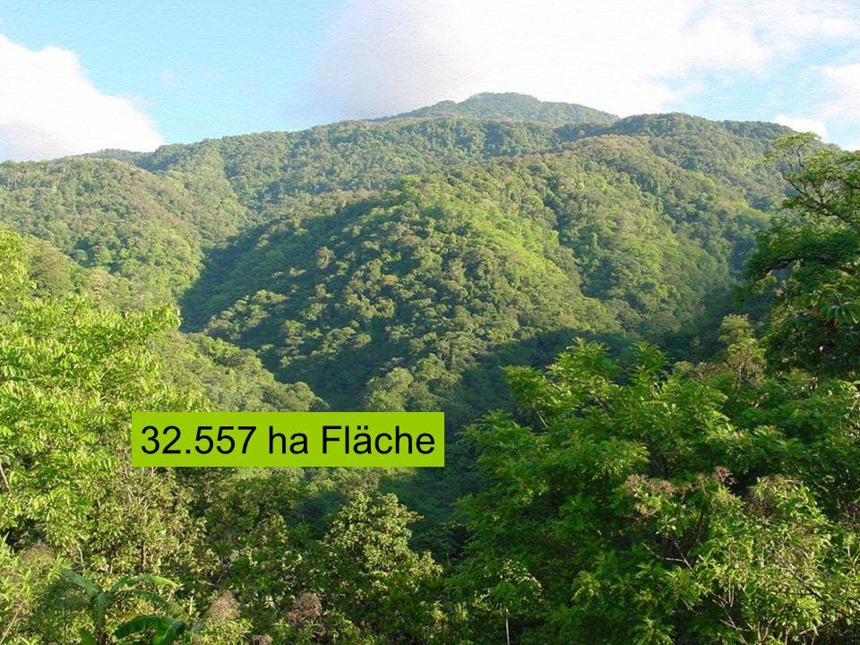 32.557 ha Fläche