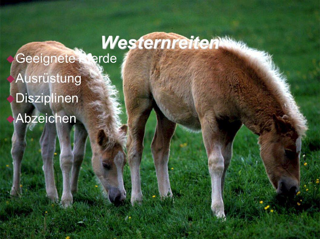 Geeignete Pferde Quater Horse Das Quater Horse kommt den Vorstellungen der Westernreiter für ihre Zwecke am nächsten Paint Horse Das Paint Hourse ist der gescheckte Verwandte des Quater Horse Appaloosa Der Appaloosa entstand durch eine gezielte Selektion von gefleckten Pferden
