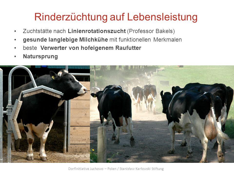 Rinderzüchtung auf Lebensleistung Zuchtstätte nach Linienrotationszucht (Professor Bakels) gesunde langlebige Milchkühe mit funktionellen Merkmalen be