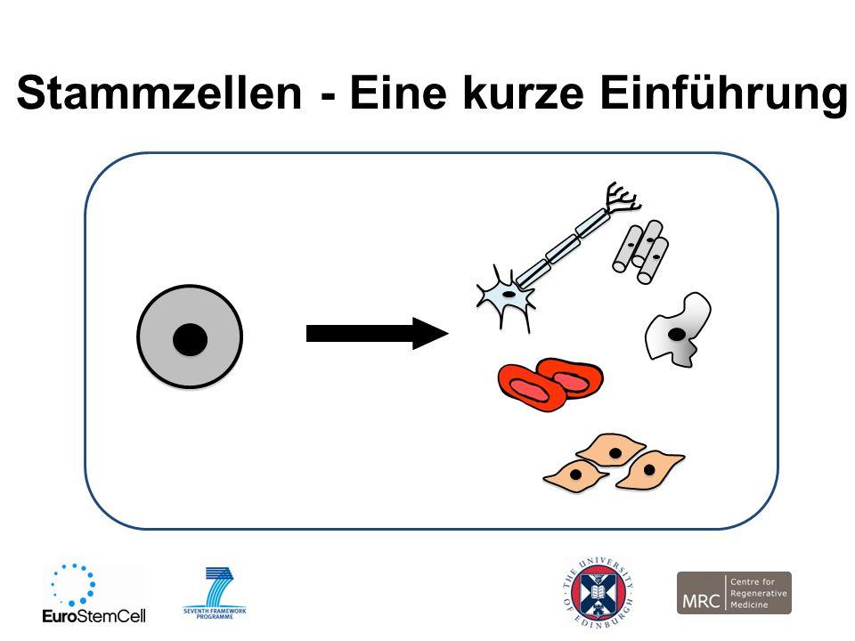 Stammzellen - Eine kurze Einführung