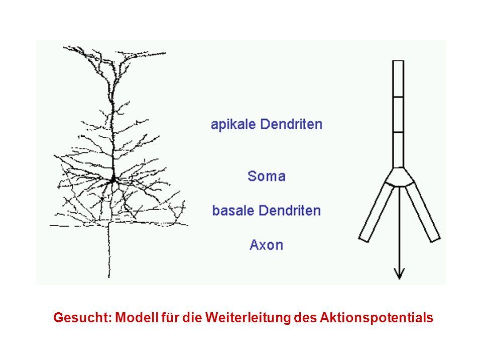 Anwendungen aus der EEG-Biometrie - Artefakterkennung und –elimination (Lidschlag, Bewegung, …) - Automatische Schlafstadienklassifikation - Erkennung bzw.