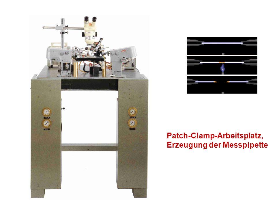 Das Modell von Hodgkin und Huxley (1952) Erforschung des Tintenfisch-Axons Verwendung der Voltage-Clamp Technik -> Isolierung der Kanalströme für Na und K Entwicklung eines Modells für die AP-Entstehung Cm: Kapazität der Zellmembran, GNa, GK: spannungsabhängige Leitwerte der Kanäle ENa, Ek: Gleichgewichtspotential von Na bzw.