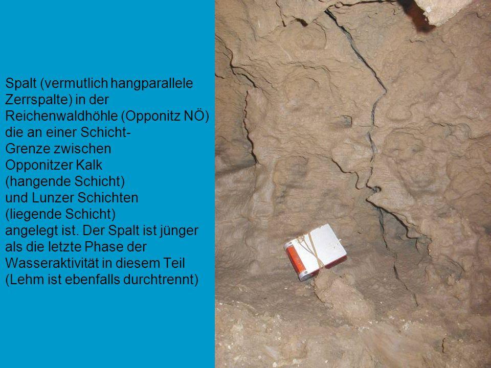 Spalt (vermutlich hangparallele Zerrspalte) in der Reichenwaldhöhle (Opponitz NÖ) die an einer Schicht- Grenze zwischen Opponitzer Kalk (hangende Schi