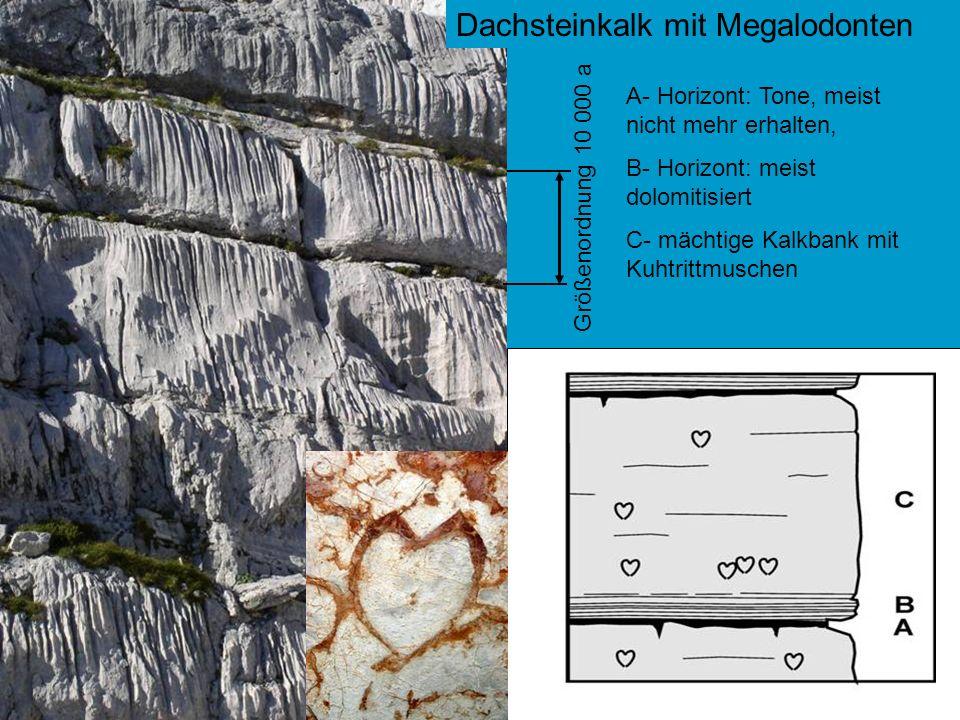 Dachsteinkalk mit Megalodonten Größenordnung 10 000 a A- Horizont: Tone, meist nicht mehr erhalten, B- Horizont: meist dolomitisiert C- mächtige Kalkb