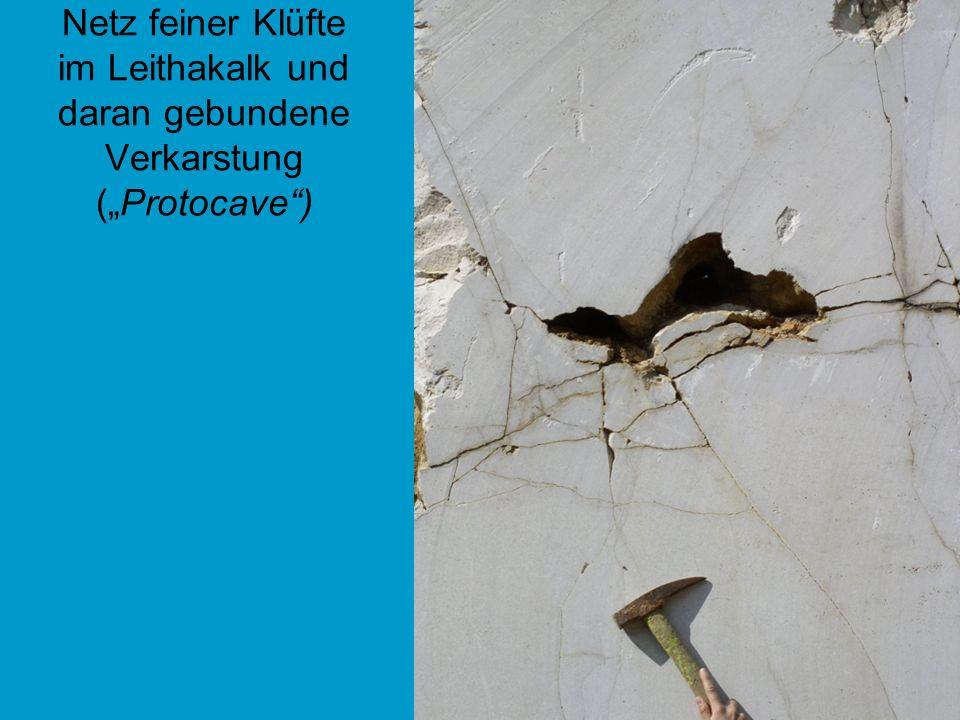 Netz feiner Klüfte im Leithakalk und daran gebundene Verkarstung (Protocave)