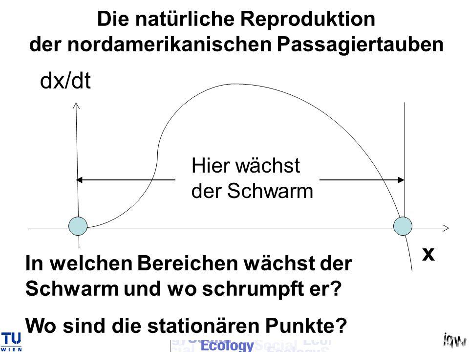 x dx/dt In welchen Bereichen wächst der Schwarm und wo schrumpft er? Wo sind die stationären Punkte? Hier wächst der Schwarm Die natürliche Reprodukti