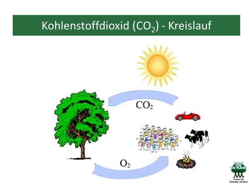 Kohlenstoffdioxid (CO 2 ) - Kreislauf