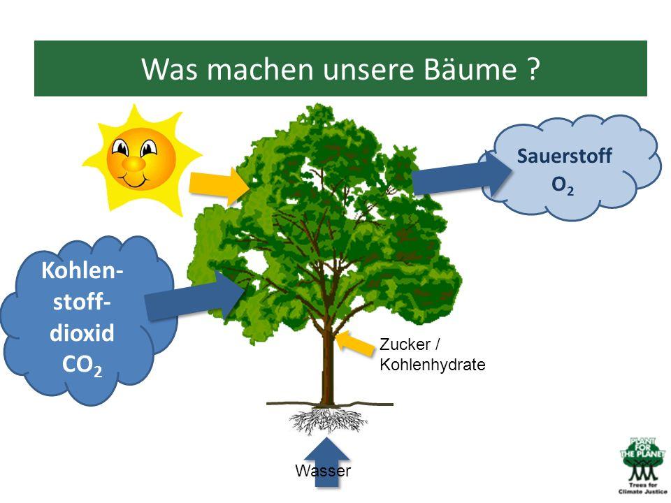 Was machen unsere Bäume ? Kohlen- stoff- dioxid CO 2 Wasser Sauerstoff O 2 Zucker / Kohlenhydrate