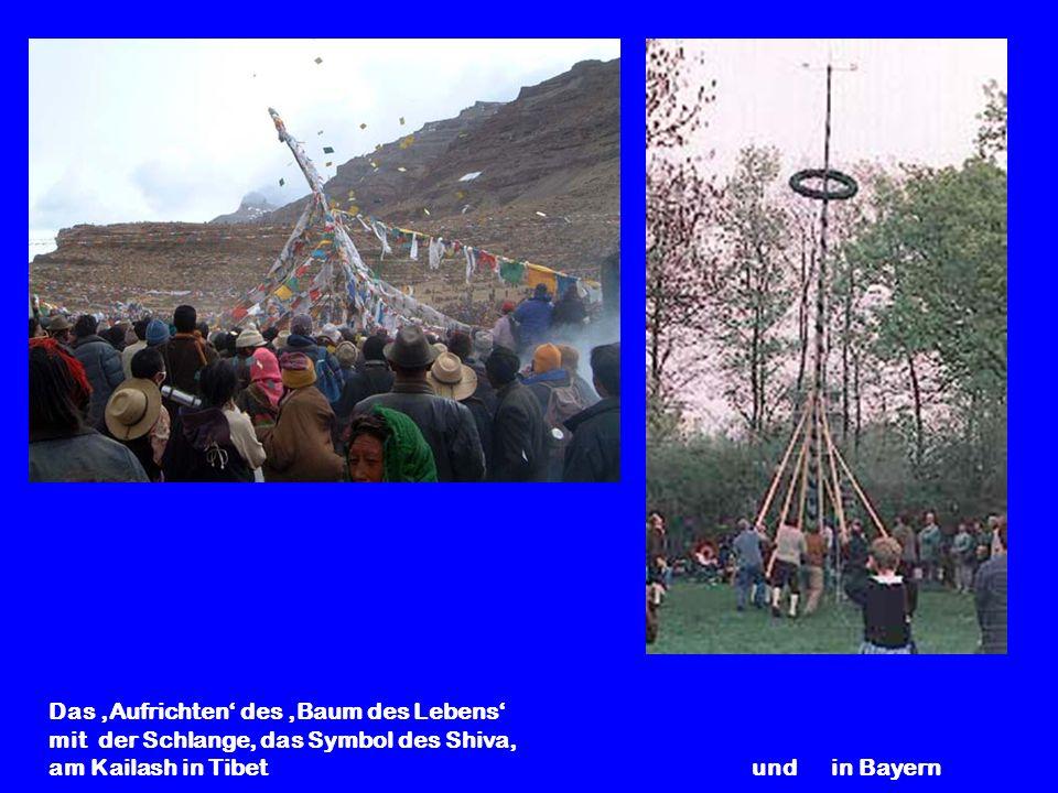 Das Aufrichten des Baum des Lebens mit der Schlange, das Symbol des Shiva, am Kailash in Tibet und in Bayern