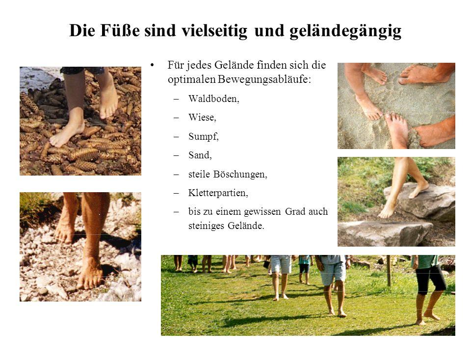 13 Die Füße sind vielseitig und geländegängig Für jedes Gelände finden sich die optimalen Bewegungsabläufe: –Waldboden, –Wiese, –Sumpf, –Sand, –steile