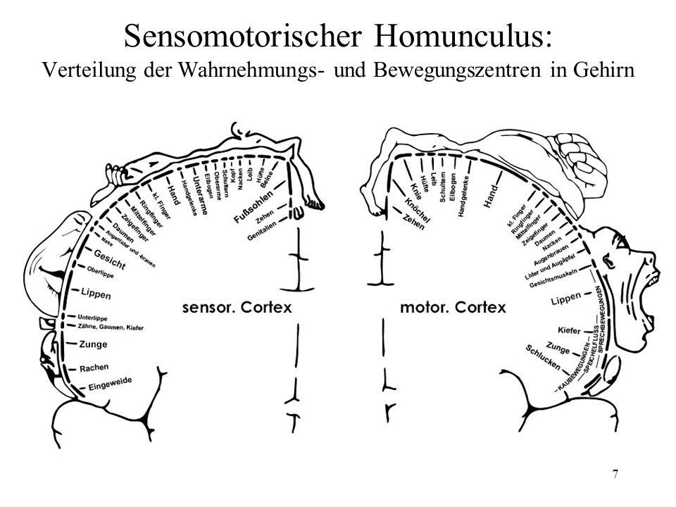 7 Sensomotorischer Homunculus: Verteilung der Wahrnehmungs- und Bewegungszentren in Gehirn