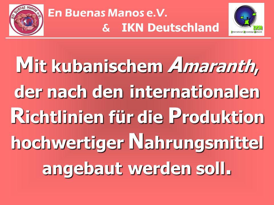 M it kubanischem A maranth, der nach den internationalen R ichtlinien für die P roduktion hochwertiger N ahrungsmittel angebaut werden soll. En Buenas