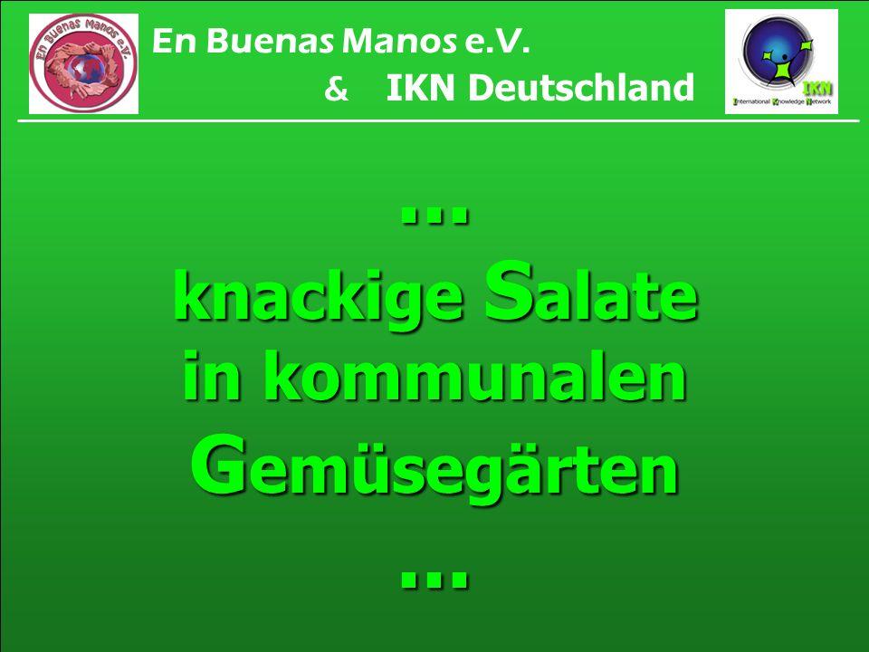 ... knackige S alate in kommunalen G emüsegärten... En Buenas Manos e.V. & IKN Deutschland