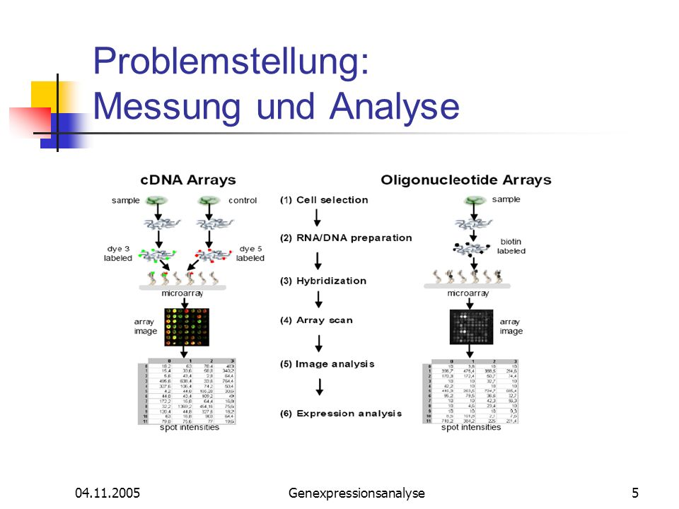 04.11.2005Genexpressionsanalyse16 Pre-Processing: Backgrundkorrektion - MAS 5.0 Micro Array Suite: Standard Pre-Processings- verfahren in Affymetrix MAS 5.0: Verwendet beide PM und MM Proben Pre-Processing der Probe-Zelle-Intensit ä ten: Background Subtraction und Noise Correction.
