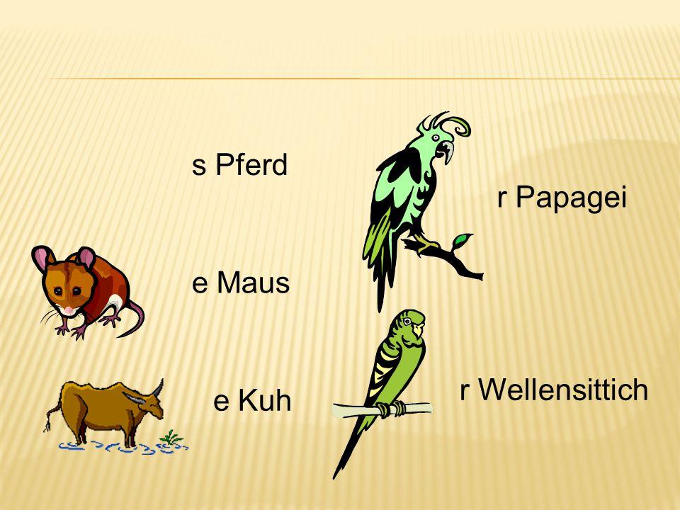 s Pferd e Maus e Kuh r Papagei r Wellensittich