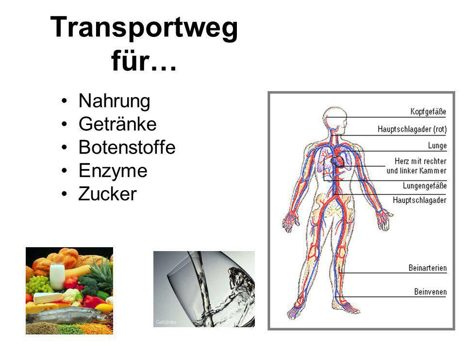 Transportweg für… Nahrung Getränke Botenstoffe Enzyme Zucker