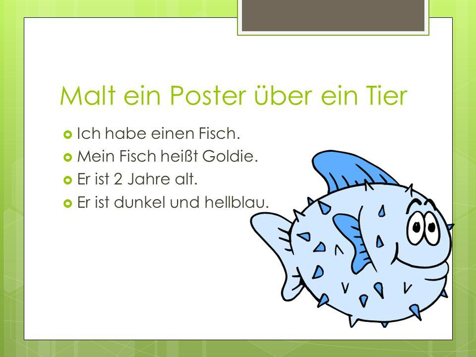 Malt ein Poster über ein Tier  Ich habe einen Fisch.  Mein Fisch heißt Goldie.  Er ist 2 Jahre alt.  Er ist dunkel und hellblau.