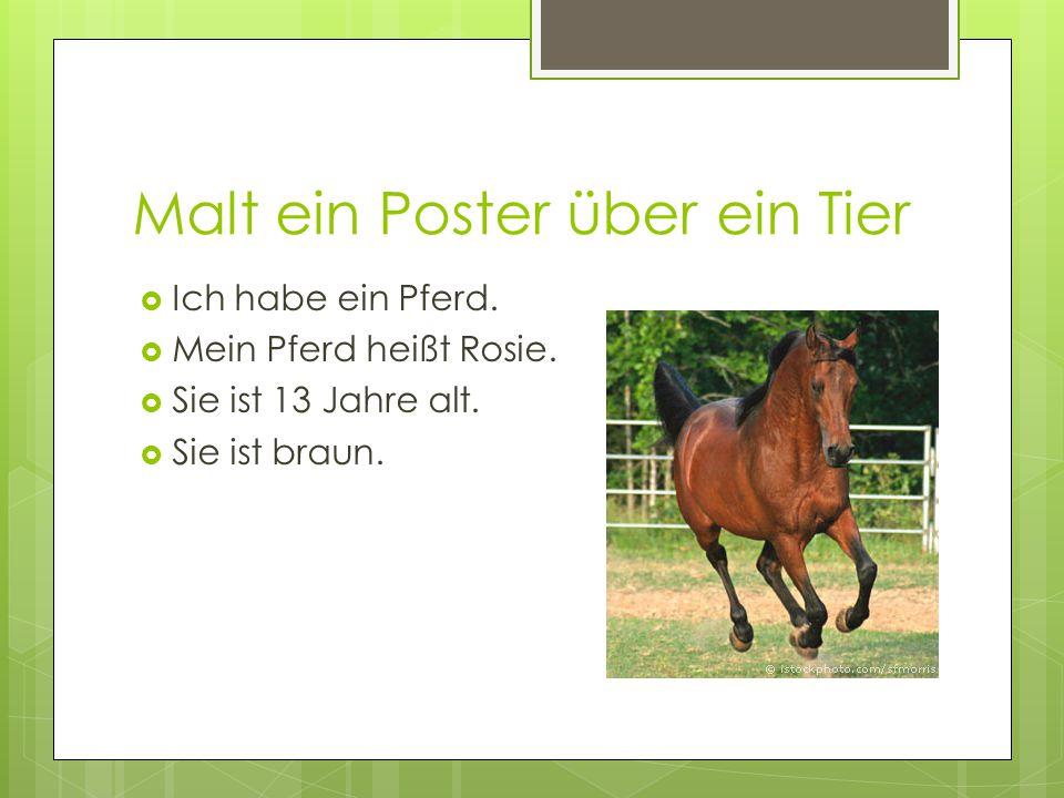 Malt ein Poster über ein Tier  Ich habe ein Pferd.  Mein Pferd heißt Rosie.  Sie ist 13 Jahre alt.  Sie ist braun.