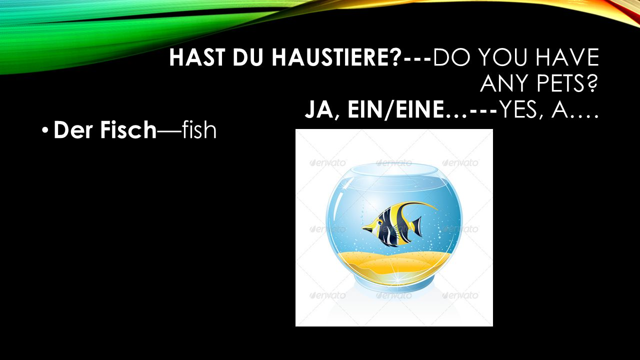 HAST DU HAUSTIERE --- DO YOU HAVE ANY PETS JA, EIN/EINE…--- YES, A…. Der Fisch —fish