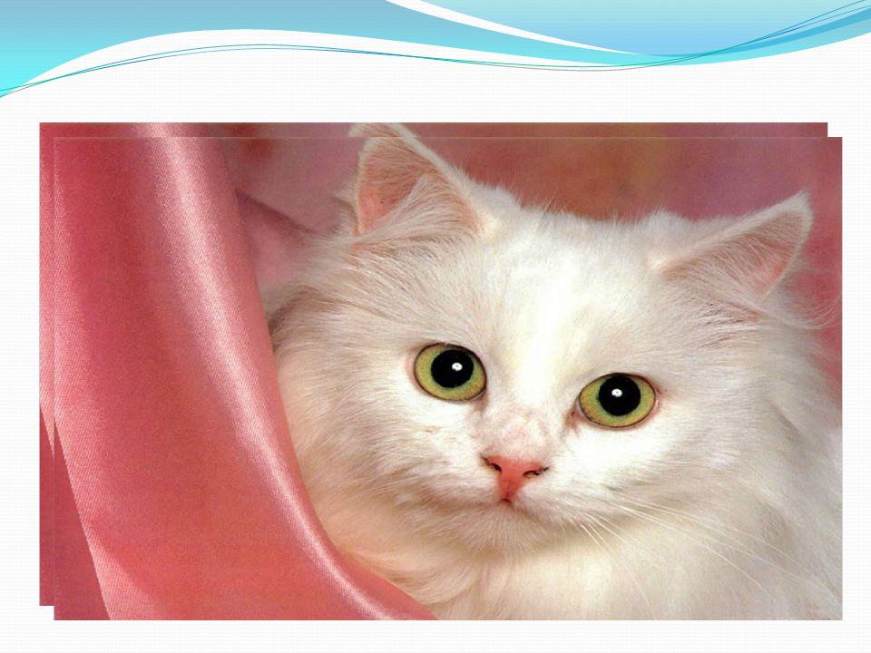 2. Wie heißt deine Katze? Meine Katze heißt…. Kescha, Rex, Murka