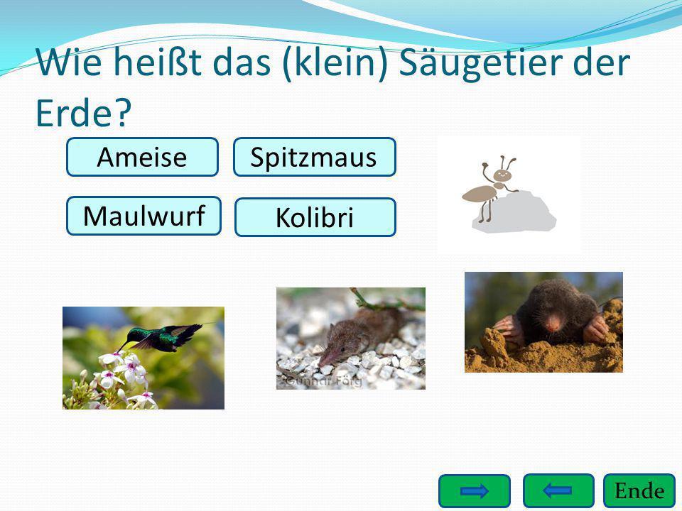 Ende Wie heißt das (klein) Säugetier der Erde? Ameise Maulwurf Kolibri Spitzmaus