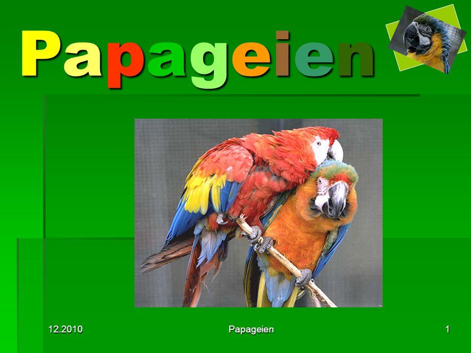 12.2010Papageien1 PapageienPapageienPapageienPapageien