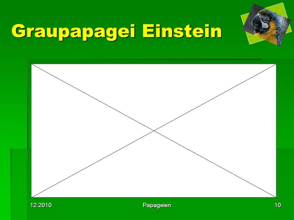 12.2010Papageien10 Graupapagei Einstein