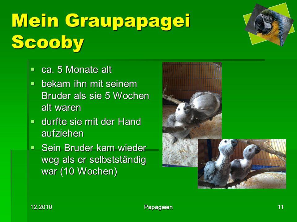 12.2010Papageien11 Mein Graupapagei Scooby  ca. 5 Monate alt  bekam ihn mit seinem Bruder als sie 5 Wochen alt waren  durfte sie mit der Hand aufzi