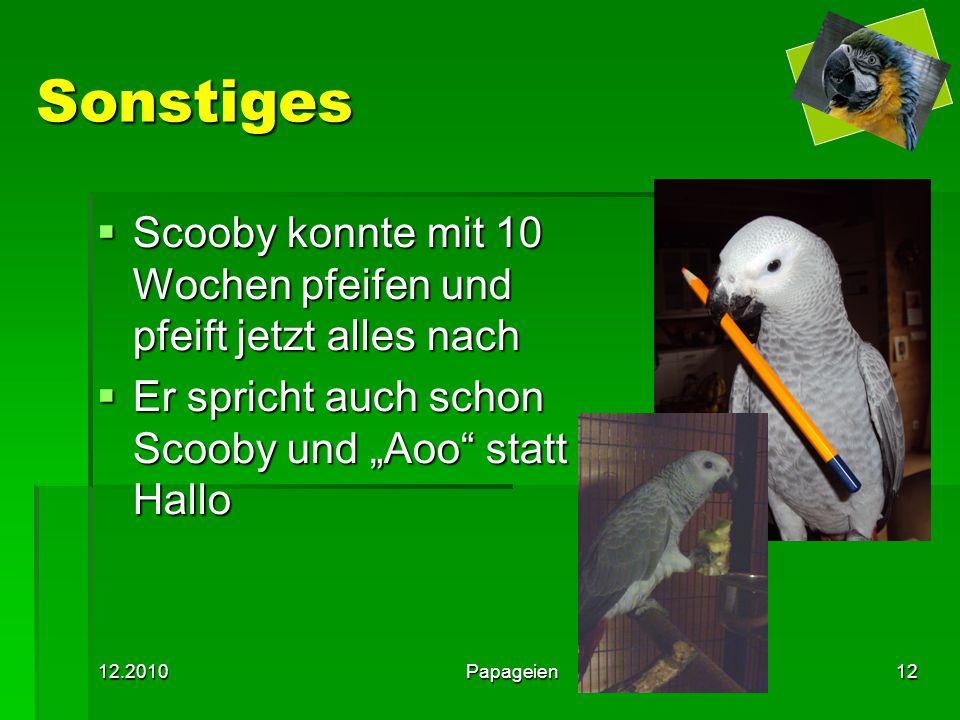 """12.2010Papageien12 Sonstiges  Scooby konnte mit 10 Wochen pfeifen und pfeift jetzt alles nach  Er spricht auch schon Scooby und """"Aoo"""" statt Hallo"""