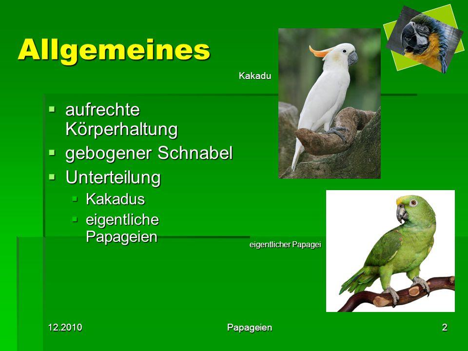 12.2010Papageien2 Allgemeines  aufrechte Körperhaltung  gebogener Schnabel  Unterteilung  Kakadus  eigentliche Papageien eigentlicher Papagei Kak