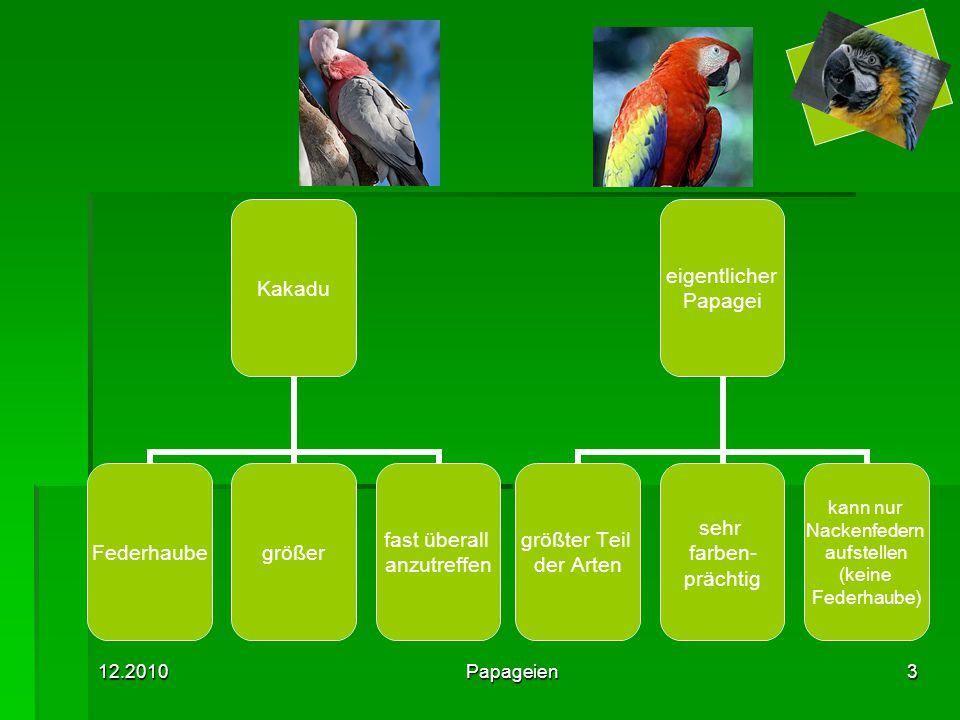 12.2010Papageien3 Kakadu Federhaubegrößer fast überall anzutreffen eigentlicher Papagei größter Teil der Arten sehr farben- prächtig kann nur Nackenfedern aufstellen (keine Federhaube)