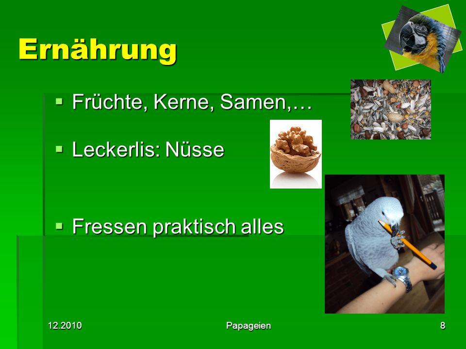 12.2010Papageien8 Ernährung  Früchte, Kerne, Samen,…  Leckerlis: Nüsse  Fressen praktisch alles