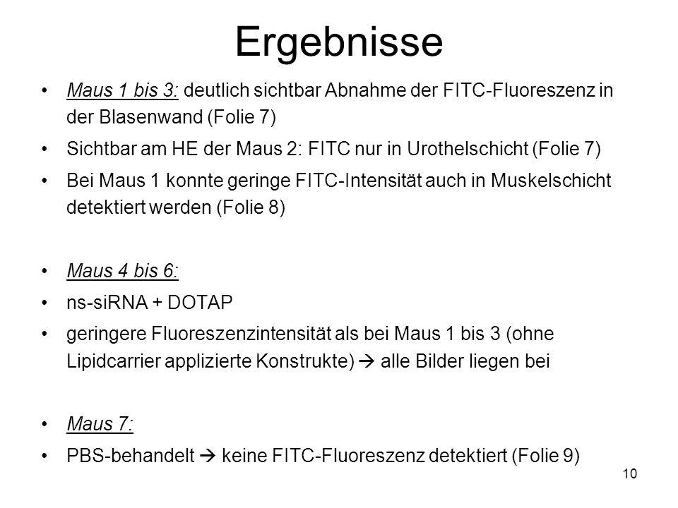 10 Ergebnisse Maus 1 bis 3: deutlich sichtbar Abnahme der FITC-Fluoreszenz in der Blasenwand (Folie 7) Sichtbar am HE der Maus 2: FITC nur in Urothels