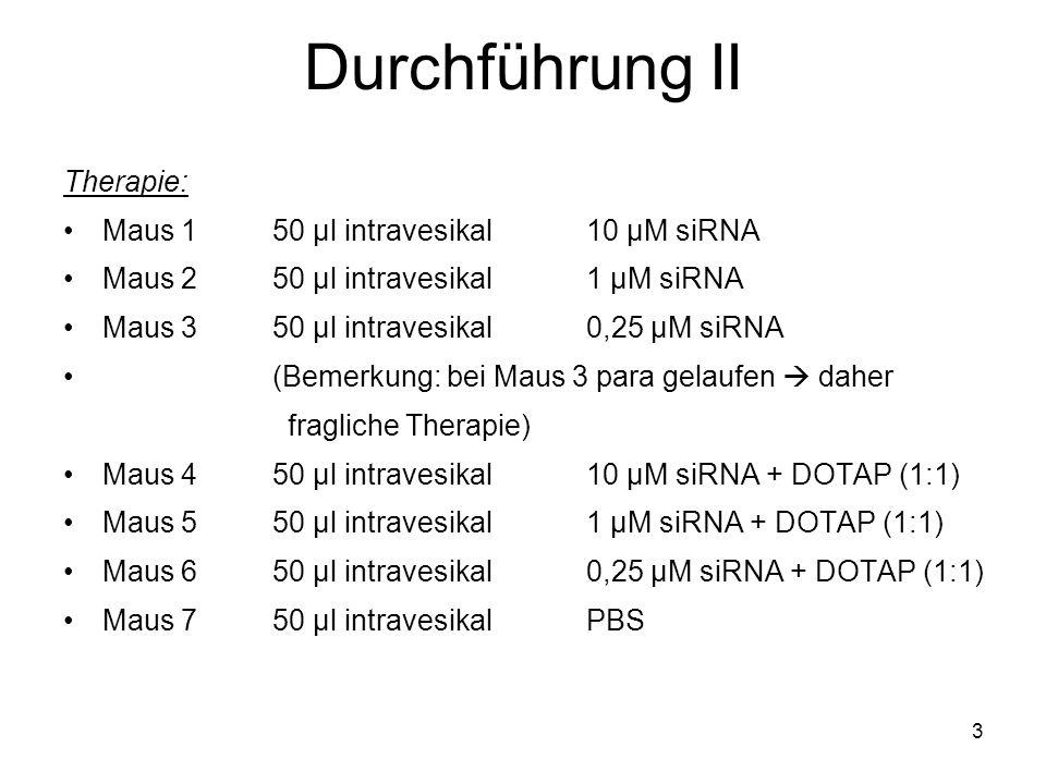 3 Durchführung II Therapie: Maus 150 µl intravesikal10 µM siRNA Maus 250 µl intravesikal1 µM siRNA Maus 350 µl intravesikal0,25 µM siRNA (Bemerkung: b