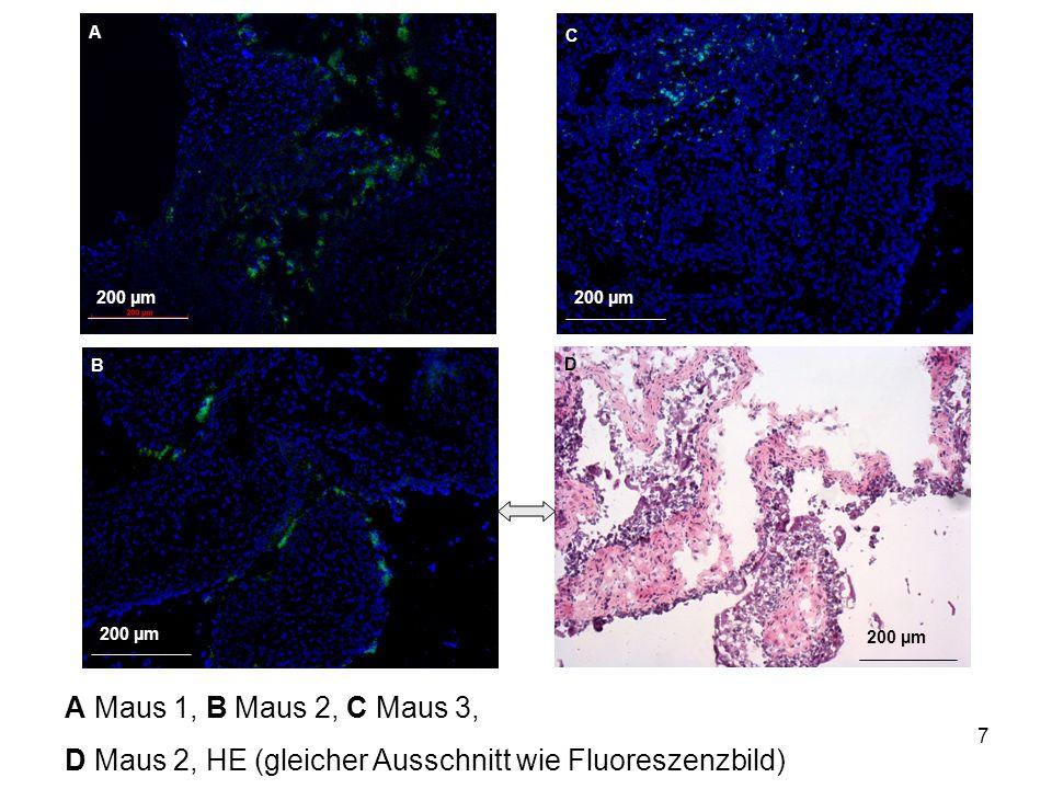 7 200 µm A B C D A Maus 1, B Maus 2, C Maus 3, D Maus 2, HE (gleicher Ausschnitt wie Fluoreszenzbild)