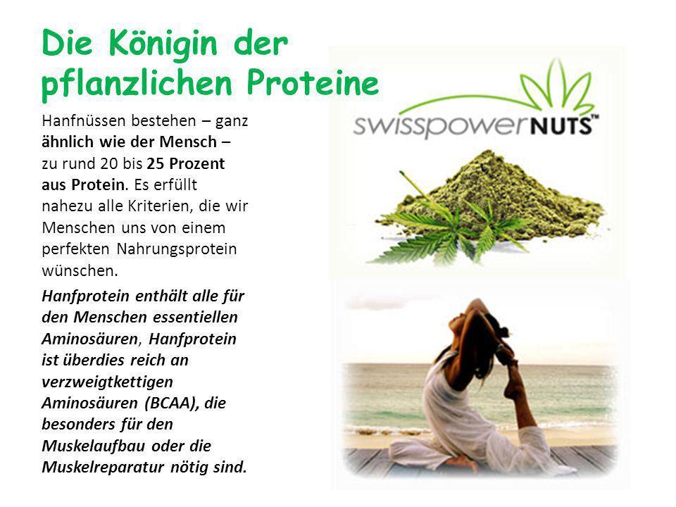 Die Königin der pflanzlichen Proteine Hanfnüssen bestehen – ganz ähnlich wie der Mensch – zu rund 20 bis 25 Prozent aus Protein.
