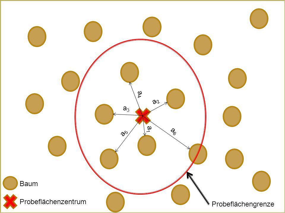 a1a1 a2a2 a3a3 a4a4 a5a5 a6a6 Baum Probeflächengrenze Probeflächenzentrum