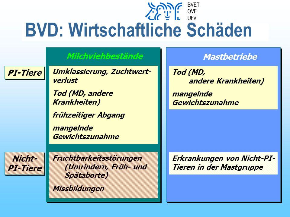 Organisation BVD Ausrottung Organisationsgremium (strategische Führung) BVET / Kantone / Landwirtschaft / Buiatrik Kantone / BVET Tierärzte Landwirtschaft Nationale Koordination