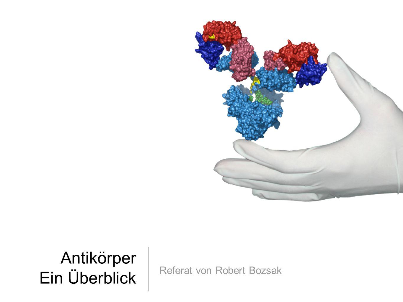 12 von der DNA zum Antikörper: Klassenwechsel & somatische Hypermutation Im Zuge der Immunantwort sind jedoch weitere Genveränderungen möglich Durch gehäufte Punktmutation im Prozess der somatischen Hypermutation können in der V-Region Änderungen hervorgerufen werden, die im B-Zellklon zu einer stärkeren Stimulierung durch das Antigen führen Dadurch wird ihm ein Wachstumsvorteil gegeben Dieser Mechanismus der Affinitätsreifung ist nur bei B-Zellen beobachtet worden Obwohl der variable Teil eines Antikörpermoleküls bei einer klonalen Zelllinie gleich bleibt, ist beim konstanten Teil der Austausch zu einer anderen Klasse möglich Dieser Prozess heißt Klassenwechsel und wird durch Cytokine von T- Lymphozyten beeinflusst Die Synthese kann immer nur in folgender Reihenfolge ablaufen: IgM, IgD, IgG, IgE und IgA