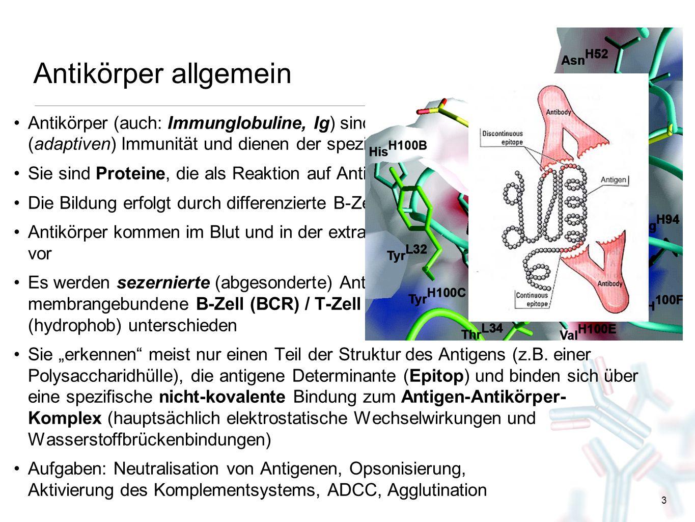 3 Antikörper allgemein Antikörper (auch: Immunglobuline, Ig) sind wichtiger Teil der erworbenen (adaptiven) Immunität und dienen der spezifischen Abwe
