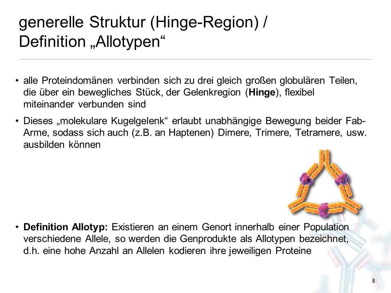 """8 generelle Struktur (Hinge-Region) / Definition """"Allotypen"""" alle Proteindomänen verbinden sich zu drei gleich großen globulären Teilen, die über ein"""
