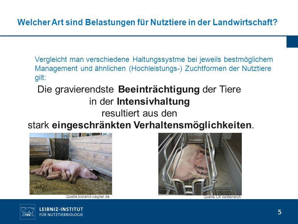 5 Welcher Art sind Belastungen für Nutztiere in der Landwirtschaft? Die gravierendste Beeinträchtigung der Tiere in der Intensivhaltung resultiert aus