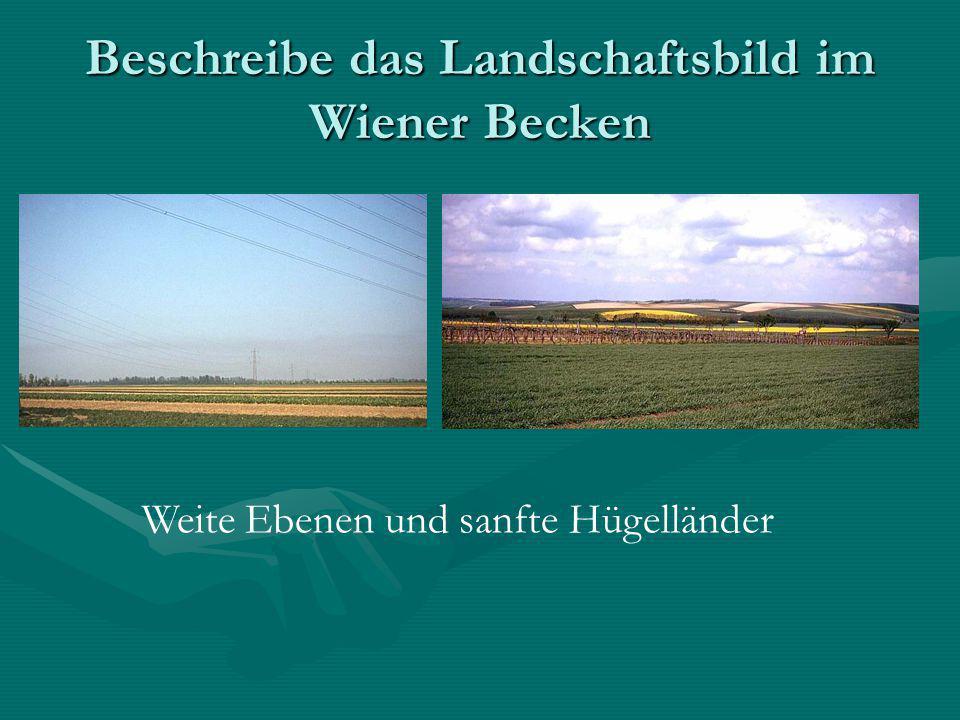 Beschreibe das Landschaftsbild im Wiener Becken Weite Ebenen und sanfte Hügelländer