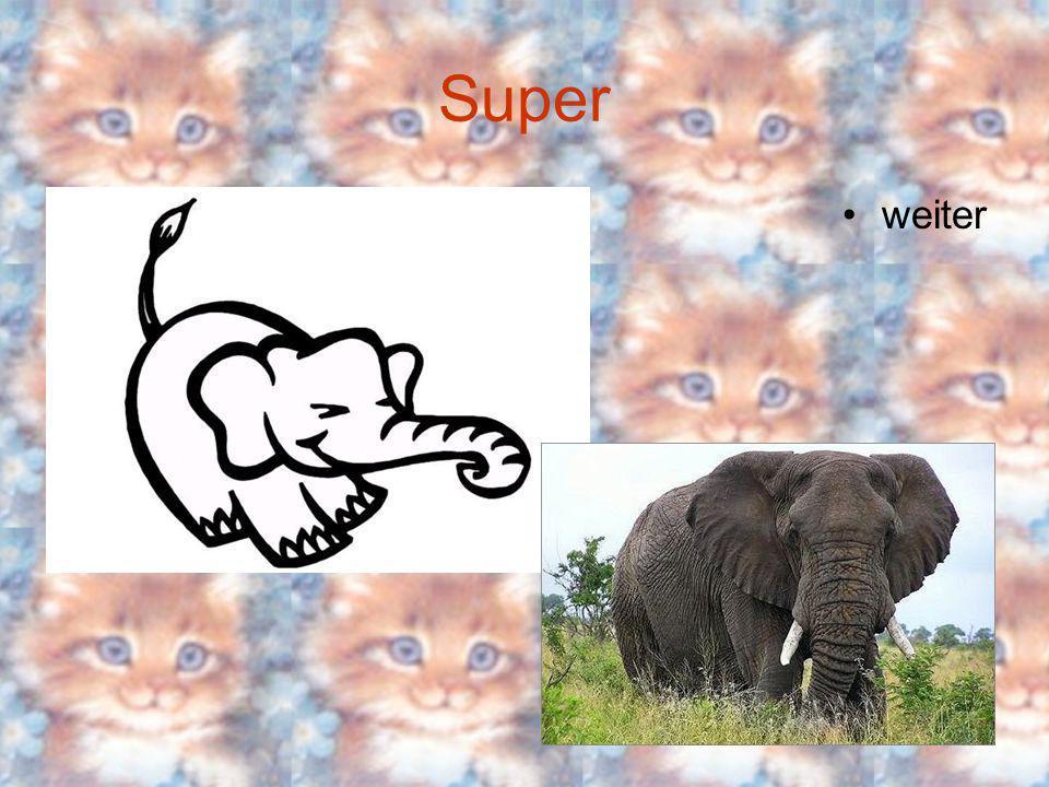 Tiere Welches Tier wiegt 5t die Maus der Drache der Elefant