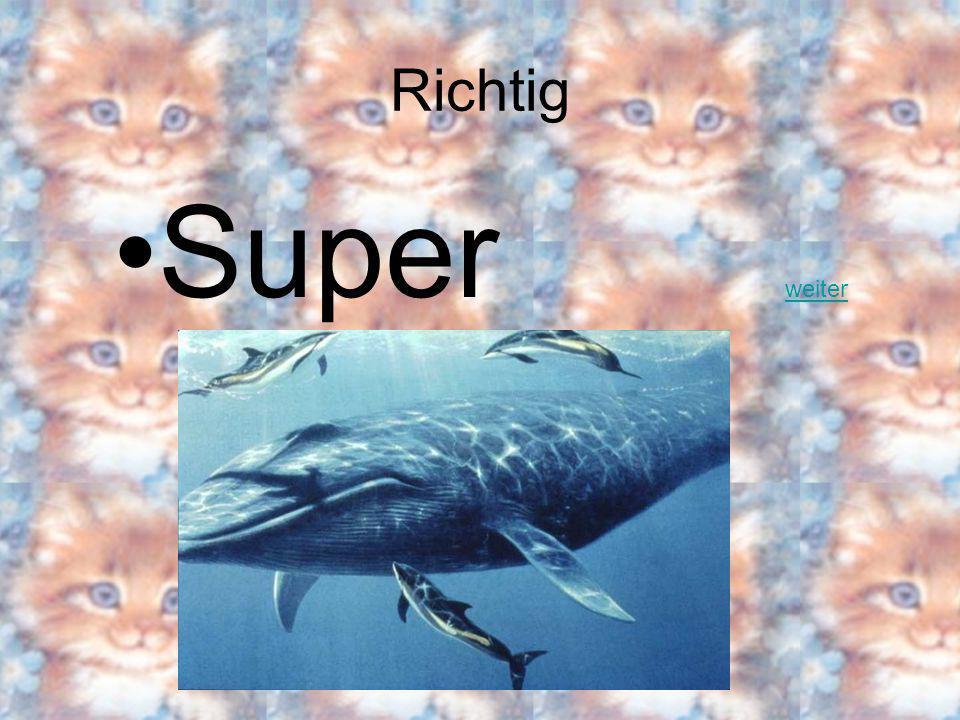 Welches Tier ist am grössten der Hai der Blauwal die Giraffe