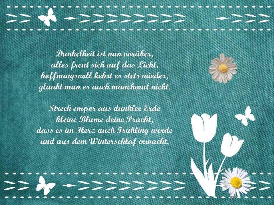 Vorsichtig streckst du aus der Erde dein Köpfchen und entfaltest sacht die weißen Blüten, denn es werde Frühling, sagt man, über Nacht. Zaghaft, noch
