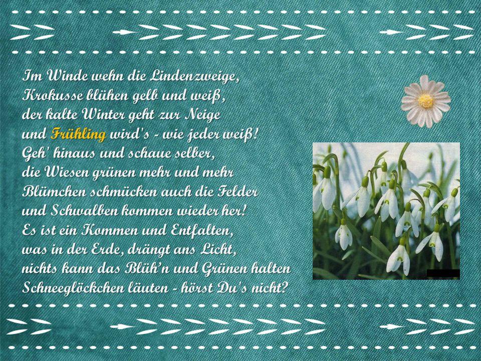Im Winde wehn die Lindenzweige, Krokusse blühen gelb und weiß, der kalte Winter geht zur Neige und Frühling wird s - wie jeder weiß.