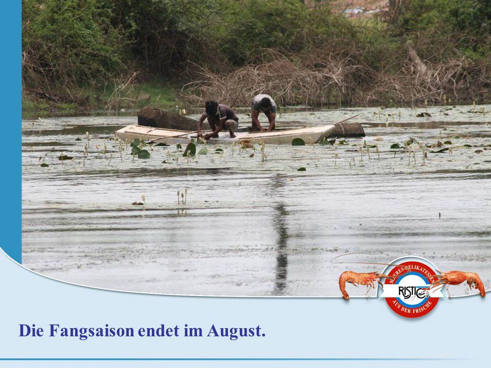Die Fangsaison endet im August.