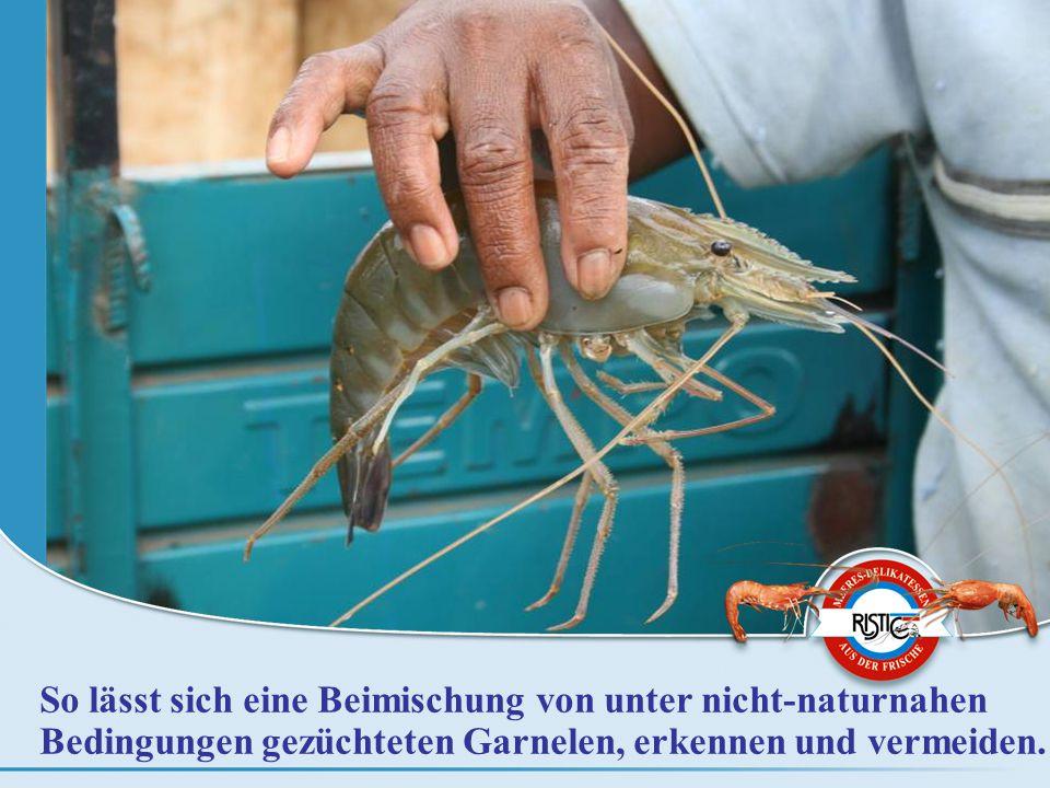 So lässt sich eine Beimischung von unter nicht-naturnahen Bedingungen gezüchteten Garnelen, erkennen und vermeiden.